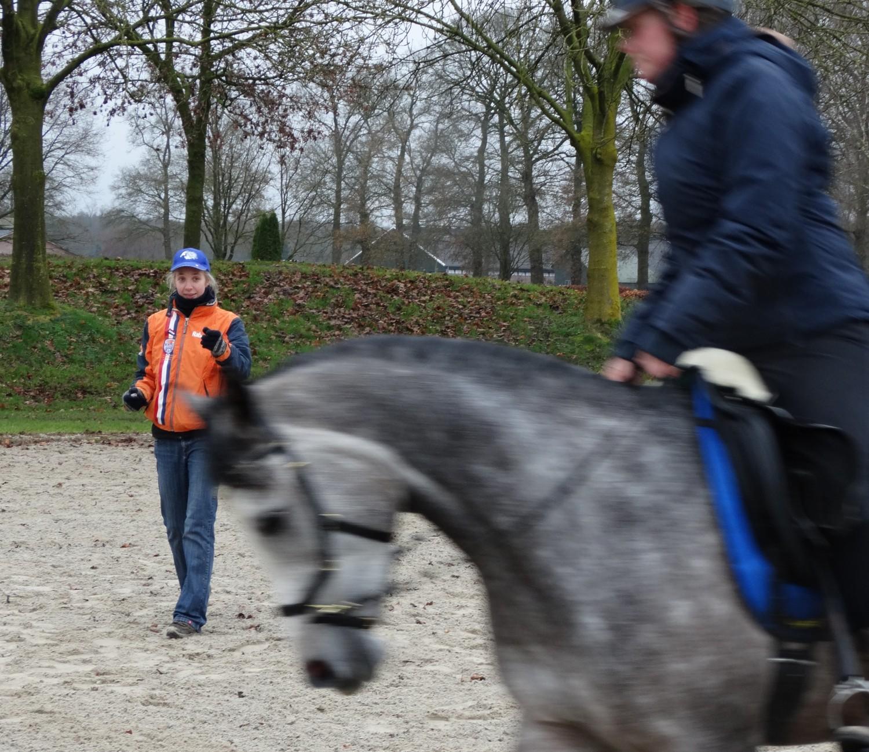 Conditietraining paard