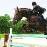 Hartslagmeters voor paarden