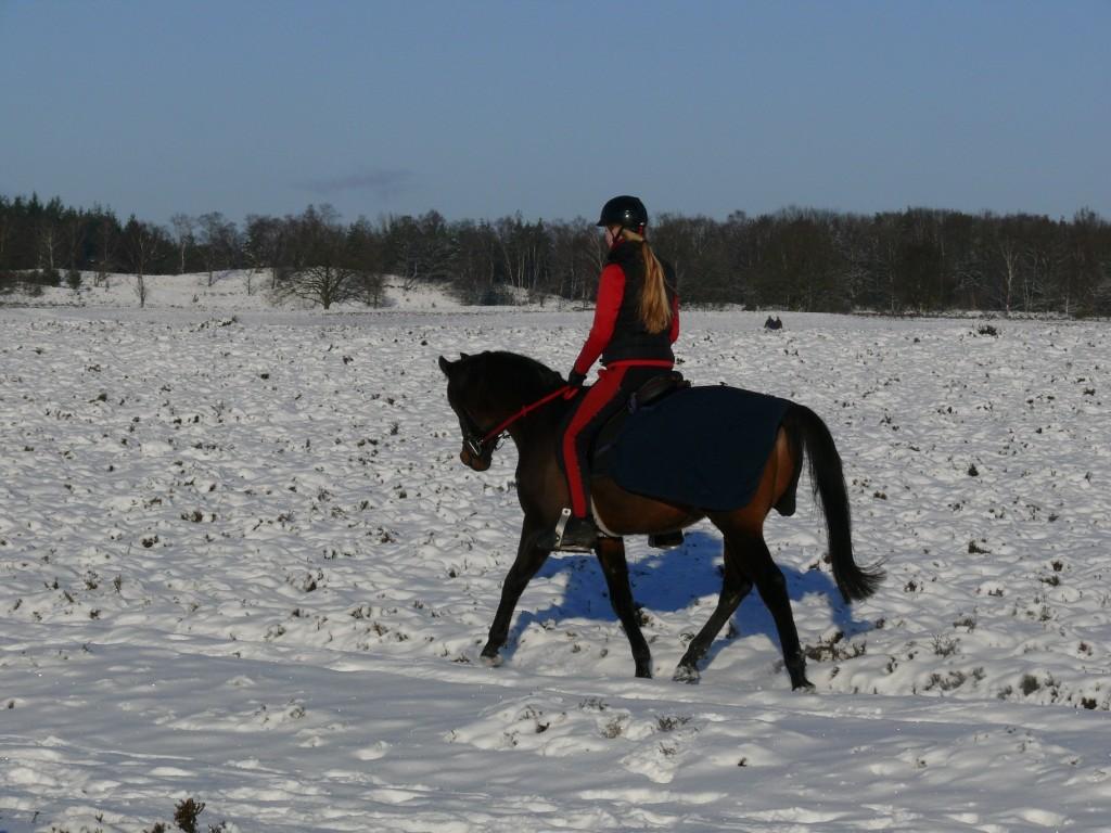 Conditietraining van je paard in de sneeuw