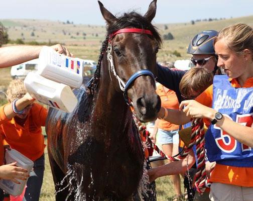 hartslag hartslagmeter paard koelen