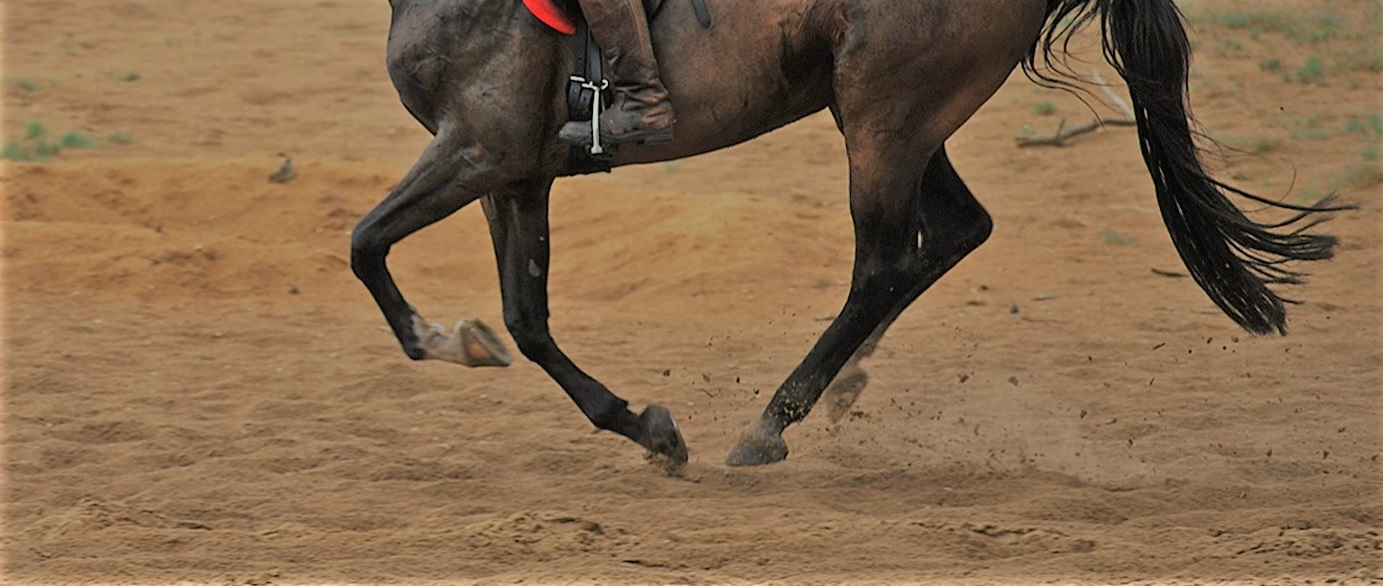 paard coordinatie training